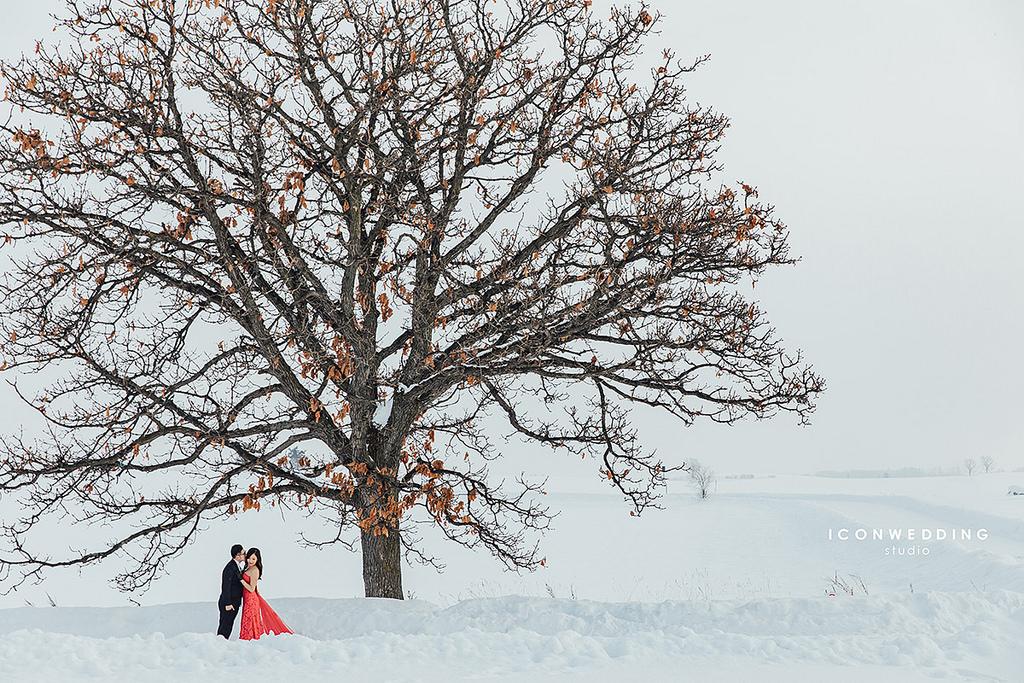 青池,北海道海外婚紗,Seven Stars Tree,小樽運河,札幌電視塔