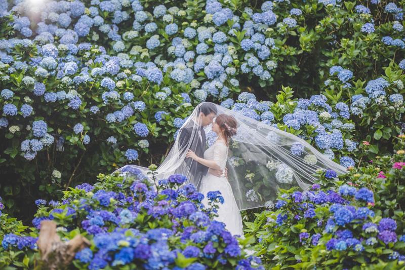 拍婚紗|繡球花園。黑森林。真愛桃花源